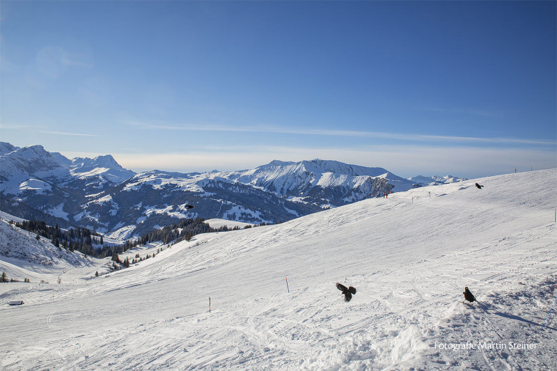 adelboden_winterlandschaft_24.1.2021_0168