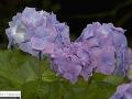 cornwall_8.2008_246.jpg