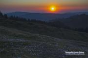 raemisgummen_krokus_sunset_07.04.2020_0292-stm