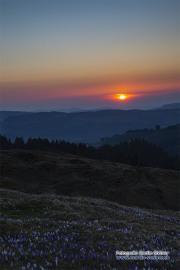 raemisgummen_krokus_sunset_07.04.2020_0326-stm