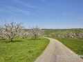 kirschbluete_18.04.2011670