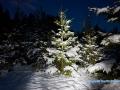 lightpainting_tanne_winter_09.12.2017_12
