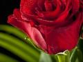 rosen_studio_25.2.2008-0049
