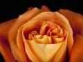 rosen_studio_26.2.2008-0008