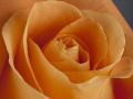 rosen_studio_26.2.2008-0143