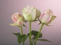 rosen_studio_7.2.08-0030