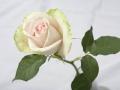 rosen_studio_7.2.08-0103