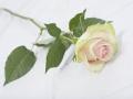 rosen_studio_7.2.08-0105