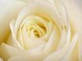 rosen_studio_7.2.08-0114