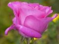 rosenhuber_2.6.09-0033