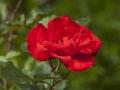 rosenhuber_2.6.09-0143