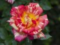 rosenhuber_2.6.09-0152