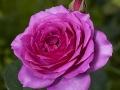 rosenhuber_2.6.09-0159