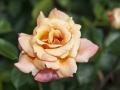 rosenhuber_2.6.09-0163