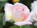 rosenhuber_23.6.06-0052