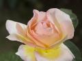 rosenhuber_23.6.06-0068