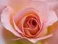 rosenhuber_23.6.06-0114
