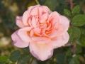 rosenhuber_23.6.06-0119