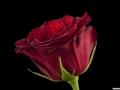 rosen_studio_25.2.20080059.jpg