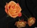 rosen_studio_26.2.20080055.jpg