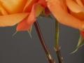 rosen_studio_26.2.20080089.jpg