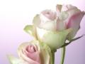 rosen_studio_7.2.080039.jpg