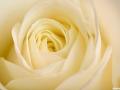 rosen_studio_7.2.080113.jpg