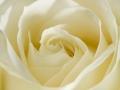 rosen_studio_7.2.080177.jpg