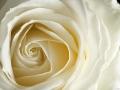 rosen_studio_7.2.080187.jpg
