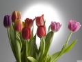 tulpen_23.2.070019.jpg