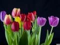 tulpen_23.2.070027.jpg