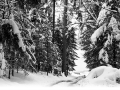 Capturefile: D:\winter_emmental_24.3.07\winter_emmental_24.3.07-0067.CR2 CaptureSN: 530201839.000010 Software: Capture One LE for Windows